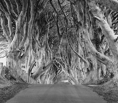 Dark Hedges 1 Explored (Darren Flynn) Tags: road trees bw beach canon leaf branches twist northernireland antrim 60d darkhedges greystonescameraclub