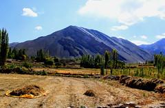 nimo, ladakh (thupstan_rin) Tags: india ladakh worldtrekker