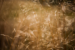 Blur (Hkan Dahlstrm) Tags: grass yellow se skne sweden sverige uncropped sandhammaren sterlen f40 2014 skneln canoneos5dmarkii sek ef2880mmf284lusm 12611102014164701