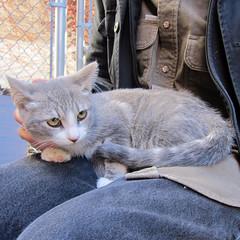 Gem (Jimmy Legs) Tags: street cats brooklyn kittens williamsburg greenpoint bushwick gem adoptable adoptionevents northbrooklyncats