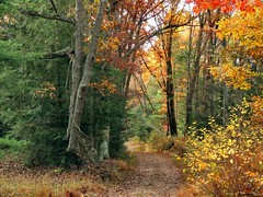 Road Less Traveled (sharis snaps) Tags: road autumn trees fall woods path fallcolors dadswoods