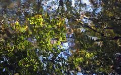 time for reflection (julies517) Tags: autumn ny nikon explore explore182