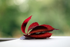 Atterrissage russi (Nadia L*) Tags: autumn red green fall automne rouge leaf vert feuille
