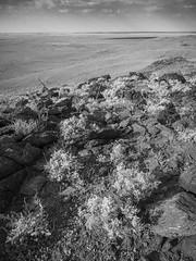 boolcoomatta sept 2014 - wiperaminga - 9291276 (liam.jon_d) Tags: blackandwhite bw monochrome landscape mono arty desert australian photojournalism conservation australia outback sa southaustralia bha semiarid nocolour withoutcolour southaustralian billdoyle bushheritageaustralia westernloop blackandwhitephotojournalism conservationreserve abhf boolcoomatta bushheritage outbacklandscape australianbushheritagefund boolcoomattareserve wiperaminga wiperamingahill eremophilaloop pickmeset