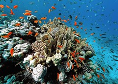 coral home (gillybooze (David)) Tags: coral fish redsea egypt ©allrightsreserved scuba diving reef sea madale underwater images madaleunderwaterimages