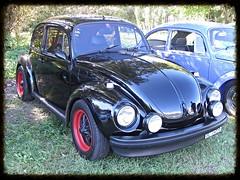 VW Beetle (v8dub) Tags: auto old classic car vw bug volkswagen automobile beetle automotive voiture german cox oldtimer oldcar collector kfer coccinelle kever fusca aircooled youngtimer wagen pkw klassik maggiolino bubbla worldcars