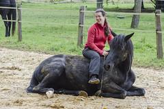 Antoinette Greindl (NosChevaux.com) Tags: horse caballo cheval chevaux paard paarden ethologie noschevauxcom antoinettegreindl