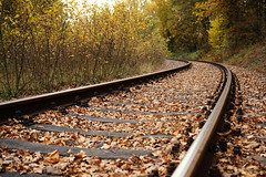 Autumn Rail (Mysterious Lens) Tags: wood autumn trees brown nature leaves yellow metal forest way season landscape wooden long alone sony rail railway going forgotten fullframe inspire a7 lonliness forget sonya7