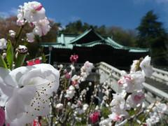 Naritasan Teishoji Temple - Sadayakko temple - 貞照寺 川上貞奴