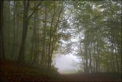 Brume d'automne (Excalibur67) Tags: autumn trees nature forest automne landscape nikon contemporary sigma arbres paysage brouillard brume d7100 forts 1770f284dcoshsmc