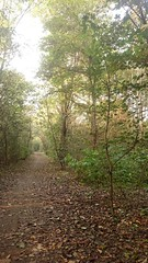 DSC_0031 (vittorio.sanzone) Tags: wood trees italy parco milan tree alberi forest italia milano nord bosco foresta