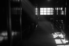 sidelight (nao_4skies) Tags: bw m8 lightshadow summaron35cmf35l