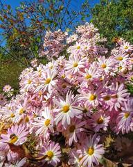A Herd Of Flowers (BigTonyB) Tags: flowers nc northcarolina beautifulday chathamcounty