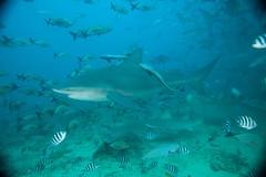Fiji_Diving_5251