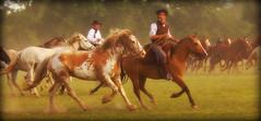 Seguir adelante! (Eduardo Amorim) Tags: horses horse southamerica argentina criollo caballo cheval caballos gracias cavalos pferde herd cavalli cavallo cavalo gauchos pferd besos chevaux gaucho cavall  amricadosul beijos gacho amriquedusud provinciadebuenosaires  gachos  sudamrica sanantoniodeareco suramrica amricadelsur areco sdamerika crioulo caballoscriollos criollos  tropillas americadelsud tropilhas tropilla crioulos cavalocrioulo americameridionale tropilha caballocriollo eduardoamorim cavaloscrioulos mimadreyaestensucasa pensabaquelohababorrado peroqued noquieropreocuparte cuandoterminestusexmenesyatecontar cmoesttumadre