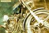 Triumph Gold
