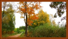 The bridge... (Eva's PhotoAlbum) Tags: bridge autumn trees orange white green grass leaves yellow grey sweden path bushes bergslagen skinnskatteberg vestmanland natureandpeopleinnature ruby10