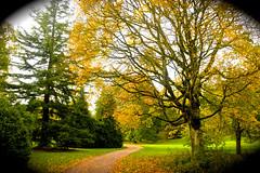 WESTONBIRT COLOUR (chris .p) Tags: uk autumn trees england colour tree nikon path walk cotswolds gloucestershire westonbirt gb 2014 d610