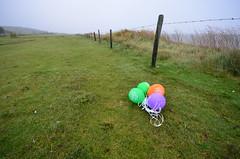 Vlieland - weiland van Roel - marine litter - Pizza Hut balloons (Dirk Bruin) Tags: strand ronald vlieland marine ballon balloon nederland mcdonalds litter pizza hut pizzahut mcdonald eiland ballonnen vervuiling ballonlint pizzahutnederland