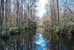 everglades_002-1 (i-Tours) Tags: trees plants water florida swamp everglades fla bigcypress