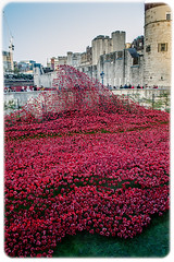 Wave of poppies (NSJW photos) Tags: london ceramic nikon wave fallen poppies tribute ww1 toweroflondon commemorate d3200 nsjwphotos bloodsweptlandsandseasofred 888246
