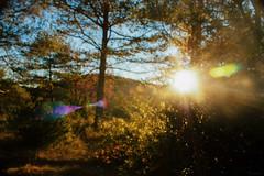 shine (life-and-camera) Tags: morning blue autumn trees light shadow sky sunlight mountain blur mountains fall nature yellow forest sunrise landscape dawn bokeh catalonia flare catalunya ripolles pirineu pirenee ogassa santjoandelesabadesses