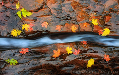 fallcolors fall autumn zionnationalpark zion utah subway... (Photo: terenceleezy on Flickr)