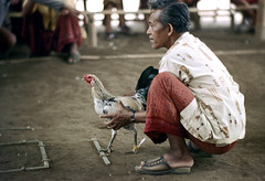 26-151 (ndpa / s. lundeen, archivist) Tags: people bali man color men bird film birds 35mm indonesia 26 sandals nick cock arena southpacific handlers rooster cocks 1970s spectators 1972 handler roosters sandal indonesian crouching cockfight gamecock onlookers squatting gamecocks balinese dewolf oceania pacificislands cockfighting nickdewolf photographbynickdewolf cockfightingarena reel26 cockfightarena