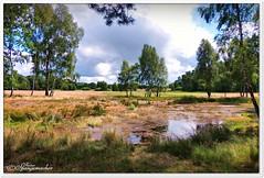 Schafstränke (Don111 Spangemacher) Tags: oberhaverbeck landschaft lüneburgerheide heide himmel heidekreis hochsommer bispingen niedersachsen natur naturschutzgebiet naturpark niederhaverbeck gewässer