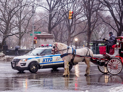 Right of Way (deepaqua) Tags: uws upperwestside tree nyc winter horse police street horseandcarriage columbuscircle snow
