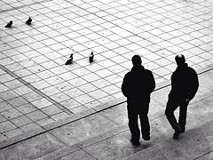 \\ In line for two \\ (Lands_of_Art) Tags: landsofart bnw nikon argentina bnwmood bnwlife double pigeons streetphotography urbanlandscape blackandwhite bnwstreet streetphoto perspective