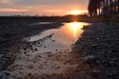 Sunset in a puddle (STE) Tags: tramonto sunset pozzanghera puddle acqua water luce light pof dof