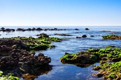 Rocas y algas (saparmo) Tags: rocas algas mediterráneo mazarrón murcia mar