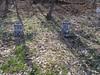 20170320_151825 (h.alfatli) Tags: bg 2017 mezar kabristan neofit bozveli bozvelievo alfatlı köyü momçilgrad