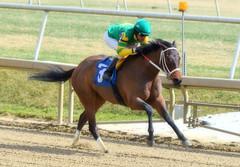 "2017-03-03 (15) r1 Julian Pimentel on #3 I Just Wanna Win (JimFleenor) Tags: photos photography md maryland laurelpark marylandracing horseracing jockey جُوكِي ""赛马骑师"" jinete ""競馬騎手"" dżokej jocheu คนขี่ม้าแข่ง jóquei žokej kilparatsastaja rennreiter fantino ""경마 기수"" жокей jokey người horses thoroughbreds equine equestrian cheval cavalo cavallo cavall caballo pferd paard perd hevonen hest hestur cal kon konj beygir capall ceffyl cuddy yarraman faras alogo soos kuda uma pfeerd koin حصان кон 马 häst άλογο סוס घोड़ा 馬 koń лошадь outside outdoors julianpimentel"