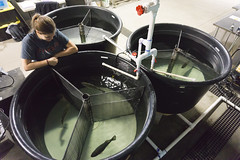 Black Bass Tanks