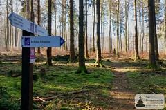 Abzweigung zur Börfinker Ochsentour (Frank Hamm) Tags: deutschland rheinlandpfalz hunsrück traumschleife wandern naturpark bäume trees forrest sonnenschein sunshine pfad weg path road moos moss