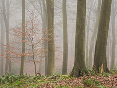 Maidensgrove (Damian_Ward) Tags: damianwardphotography ©damianward damianward trees chilterns chilternhills thechilterns fog mist oxfordshire