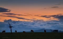 Aprilabend (AndyW Harz) Tags: wolken sky himmel abendrot afterglow kühe cow wurmberg harz