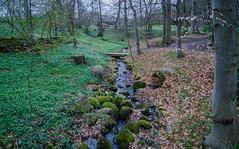 A stream in the castle park (frankmh) Tags: strean park castlepark sofierocastle helsingborg skåne sweden outdoor