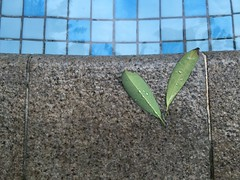 Next to the pool... Wall - Building Feature Backgrounds Background Textured  Pool Poolside Swimming Pool Day Leaf Copy Space Close-up Outdoors Growth Retaining Wall No People Nature Green Color Plant Freshness Fragility Beauty In Nature Water Follow4follo (Nick Pandev) Tags: wallbuildingfeature backgrounds background textured pool poolside swimmingpool day leaf copyspace closeup outdoors growth retainingwall nopeople nature greencolor plant freshness fragility beautyinnature water follow4follow eyeemsingapore