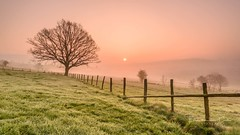 Cold start (Ellen van den Doel) Tags: grass zonsopkomst natuur sunrise nature fotoclub boom outdoor hills hek landscape lucht fence sun zon fotoweekend field tree kleur heuvels color ardennen sky landschap belgie zonsopgang 2017 april stavelot wallonie belgië be
