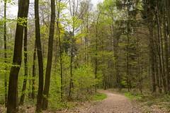 In the wood (Burnett0305) Tags: a7ii a7markii a7mii baum blatt blätter bäume frühling grün landscape landschaft landschaftnatur laub moos natur nature pflanzen sel55f18z sony sonyalpha7ii sonysonnartfe55mmf18za spring wald country foliage forrest green leaves moss plants tree wood dslrforum waldthread