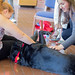 20170301 Therapy Dogs-4