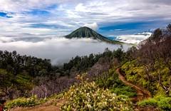 Gunung Merapi (Jhaví) Tags: indonesia javaoriental ijen volcano gunungmerapi asia sothestasia green landscapa explore volcán hiking mountain montaña