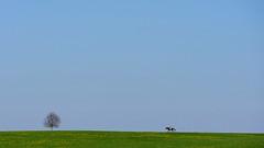 Pferdenarr (flori schilcher) Tags: 7613 pferd reiter schilcher
