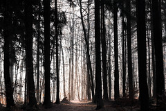 Afterlife theme (Petr Sýkora) Tags: les zima nature forest serene afterlife light silnouette trees path czech
