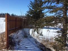Happy Fence Friday! (peggyhr) Tags: peggyhr shadows light trees fence snow hff bluebirdestates alberta canada