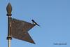 RONDINE (fabiogis50) Tags: torredellagopuccini sky cielo bird uccello banderuola swallow rondine