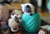 Yarn creatures^)) (KarinaKo) Tags: felted felting handmade plush toys teddy